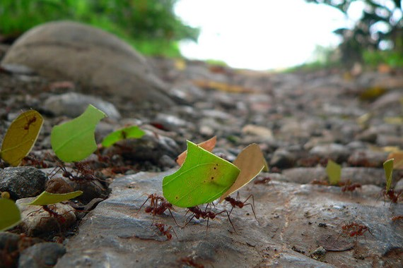 Ants carrying a leaf