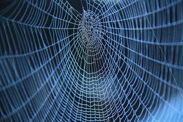 Spiders Web photo by Felix Chen (CC BY 2.0).jpg