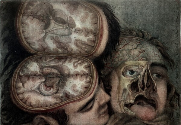 WELL L0013383 Two dissected heads by Gautier d'Agoty credit Wellcome.jpg
